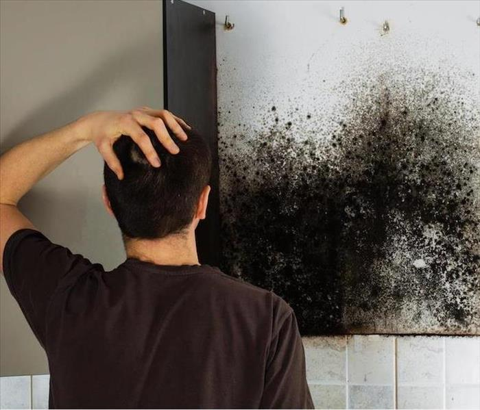 Mold Remediation Can you safely take care of mold in your business ?